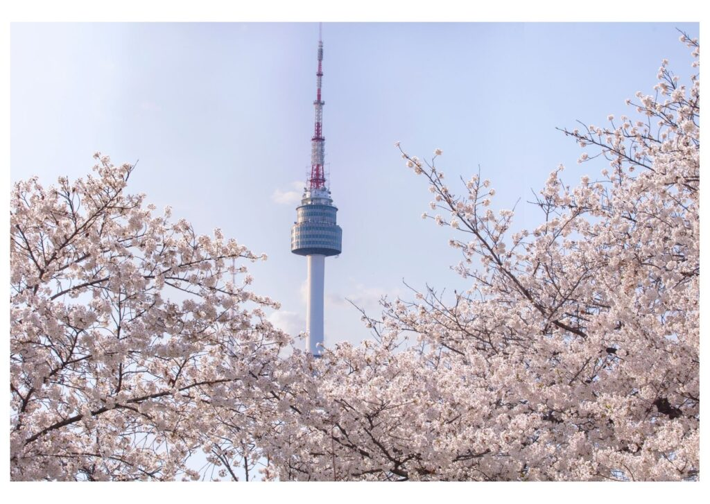 Daegu Tower seen in springtime during the cherry blossom season