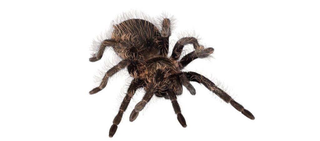a tarantula spider on the bed