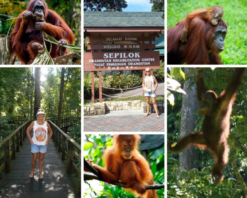 The Backpacking Housewife Orangutan Rehabilitation experience in Sepilok Borneo