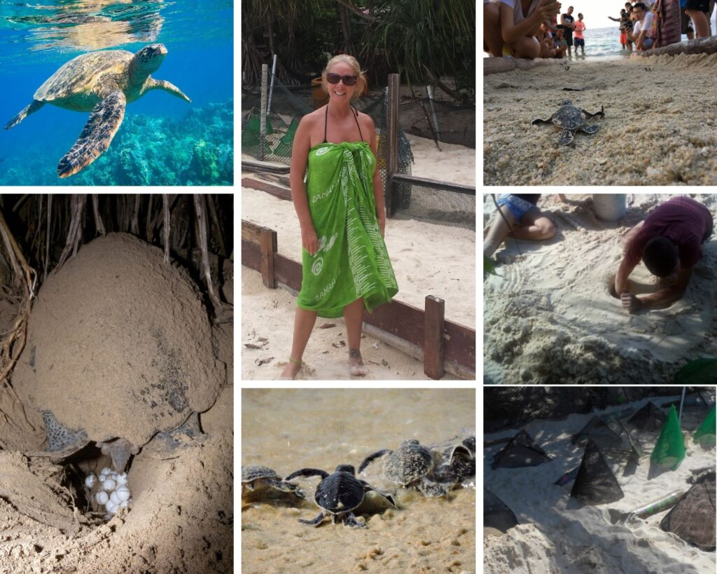 The Backpacking Housewife Turtle Conservation experience at Bubbles Resort Malaysia